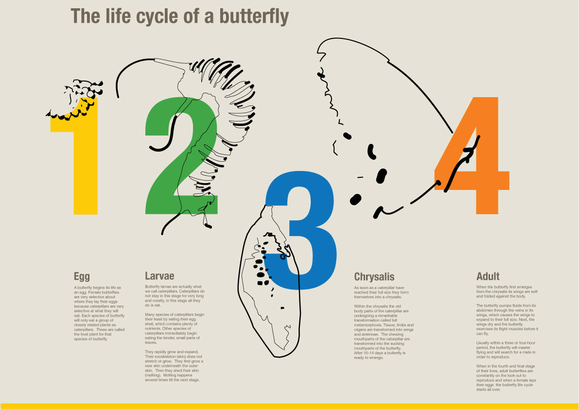 butterfly lifecycle   diana k